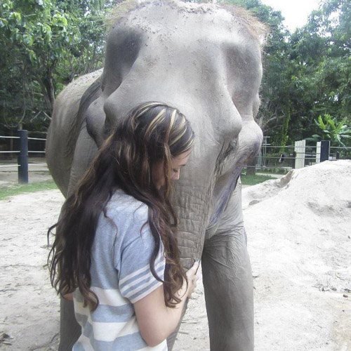elephant thailand animal