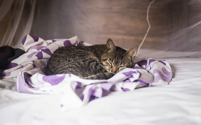 tabby cat sleeping on bed