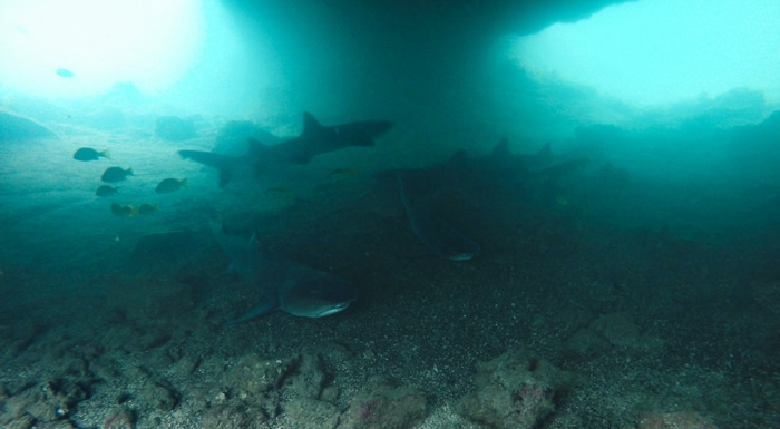 sharks in The Tunnels Tour