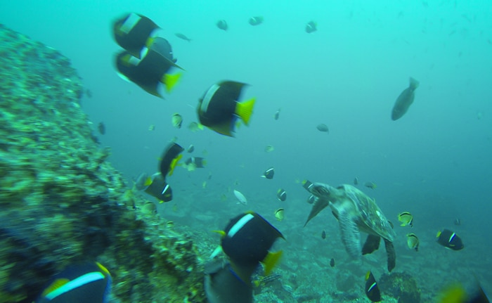 fishes and turtles underwater in Kicker Rock