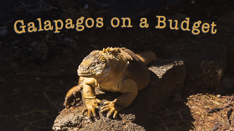 Galapagos on a Budget – Trip Cost, Last-minute Cruises, Day Tours