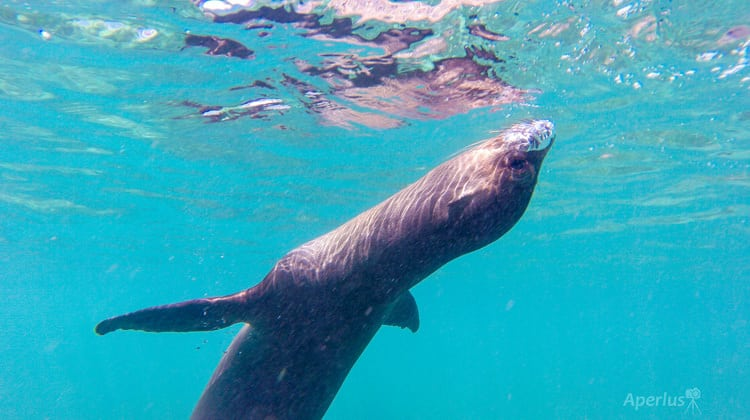The Sea Lion Awaits in Darwin's Bay