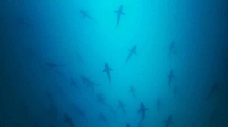 Video – Kicker Rock, Galapagos Islands, Sharks, Dolphins