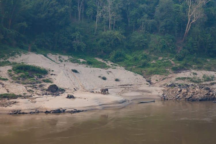 elephants along the Mekong River in Pak Beng