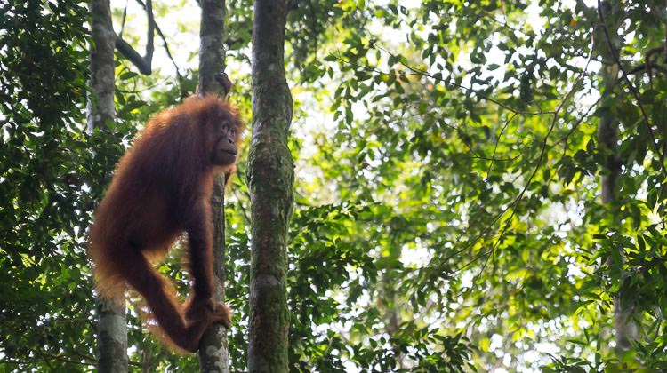 How to Take the Bus From Kualanamu Airport to Bukit Lawang
