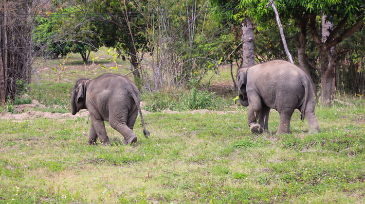 Maerim Elephant Sanctuary Review – Chiang Mai, Thailand
