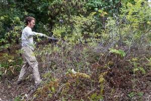 volunteer cutting blackberry (mora)